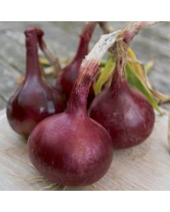 Red Baron Onions - 1kg Pack