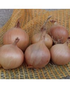 Sturon Onions - 250g Taster Pack