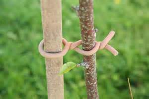 Plant and Tree Support