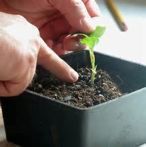 Propagation and Rooting
