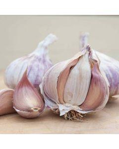 Germidour Garlic - 500g Pack
