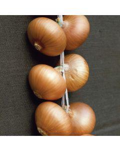 Stuttgarter Onions - 500g Pack